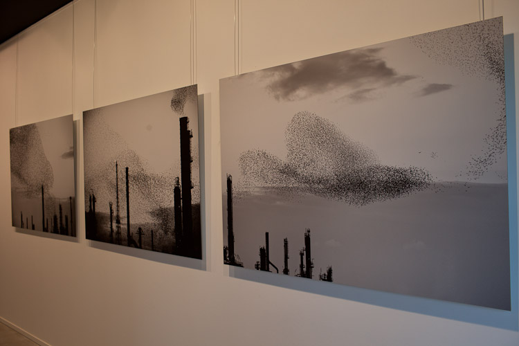 Refinery Flocks Triptych (DIBOND) 150x100cm x 3 pieces